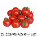 野菜苗!【苗】ピンキー【ミニトマト】 6本セット (10.5cmポット) 鹿児島