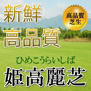 芝生 姫高麗芝 1平米 鹿児島産...