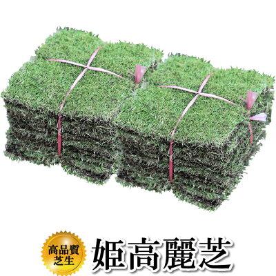 芝生!姫高麗芝1平米高品質・新鮮葉が細く密生度が高い芝生やっぱり人工芝より天然芝!ガーデニングDIY