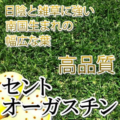 芝生セントオーガスチン★1平米日照不足に強い芝生やっぱり人工芝より天然芝ガーデニングDIY日陰
