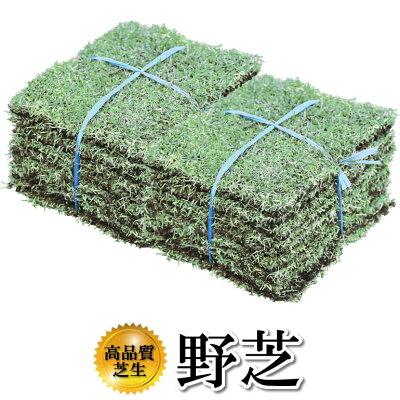 芝生!野芝(日本芝)1平米環境適応能力の高い芝生やっぱり人工芝より天然芝!ガーデニングDIY