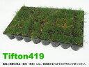 校庭緑化に鳥取方式で話題のティフトン419芝のポット苗。ダメージからの回復が早い芝生。ティフ...