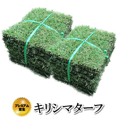 芝生!キリシマターフ(当店限定品種・日本芝)1平米高品質野芝手入れが楽・簡単な芝生やっぱり人工芝より天然芝ガーデニングDIY