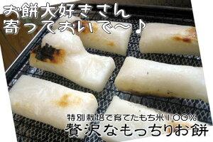 嬉しいレビュー続々♪ガンコ会長も食べてます!【ご予約受付中】特別栽培で育てたもち米100%贅...
