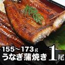 備長炭火焼【九州産】うなぎ蒲焼155g〜173g 国内産/土...
