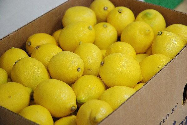 【箱売り】 レモン 1箱(115~165玉入り) チリ・アメリカ産 【業務用・大量販売】【RCP】