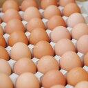 【箱売り】 輝黄卵 (玉子・たまご・卵・タマゴ) 1箱 福岡産・九州産(10kg、Mサイズ、約150〜160玉)九州 たまご 【業務用・大量販売】【RCP】・・・