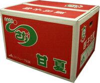 九州産 さっぱりとした味わい! 甘夏(あまなつ・なつみかん)2L・L・Mサイズ 10kg 九州の安心・安全な果物! 九州・佐賀・福岡産 【RCP】