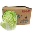 【箱売り】 白菜(はくさい・ハクサイ) 1箱(6本入り) 長野・大分・熊本・国産 【業務用・大量販...