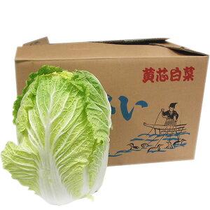 【箱売り】 白菜(はくさい・...