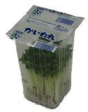 九州産 かいわれ(カイワレ・貝割れ大根) 代表的なスプラウト! 1パック 九州の安心・安全な野菜! 【九州・福岡産】