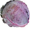 レッドキャベツ(紫キャベツ・赤キャベツ・きゃべつ) 1玉 【長野・岡山産】 サラダに入れると彩…