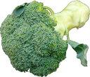 大津留青果で買える「九州産 ブロッコリー 凝縮された森。(和名・緑化野菜)  1株 九州の安心・安全な野菜! 【九州・福岡・佐賀・長崎】」の画像です。価格は216円になります。