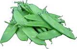 【国産】  絹さや(きぬさや・キヌサヤ)50g 緑黄色野菜と豆の栄養を兼備!