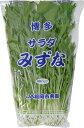 独特のピリッとした辛みと香りが魅力の水菜(京菜)!美肌作りに効果のあるポリフェノール群が含...