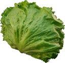 レタス(れたす) シャキシャキ食感が魅力! サラダ野菜!! 1玉 【九州産・大分・長崎・福岡産…