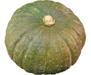 【箱売り】九州産 かぼちゃ(カボチャ・南瓜) とても栄養価の高い野菜! 4~8玉入り1箱 【長崎・沖縄・宮崎産】