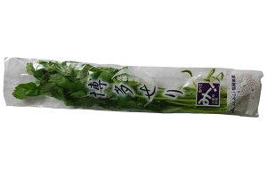 九州産 せり(セリ・芹) 春の七草のひとつ! 1束 【福岡・大分・国産】
