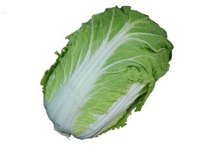 白菜(はくさい・ハクサイ)1本【長野産】