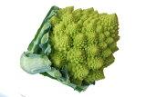 九州産 カリブロ・かりぶろ(ロマネスコ) 1玉  九州産・久留米特産 九州の安心・安全な野菜!