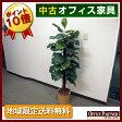 観葉植物 鉢植え フェイクグリーン【中古オフィス家具】【中古】