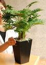 観葉植物 光触媒 スプリットフィロ 高さ53cm インテリア 玄関 造花 人工観葉植物 1