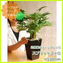 観葉植物 光触媒 スプリットフィロ 高さ53cm インテリア 玄関 造花 人工観葉植物 2