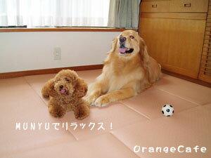 高反発衝撃吸収マルチマット☆MUNYU(むにゅ)【防音・防振・関節保護】【犬・猫用品】★シニア犬、介護にもってこいのアイテム:ワンにゃん大好き!OrangeCafe