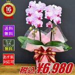 胡蝶蘭オリビア2本立ちメイン