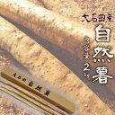 【山形県 大石田産】自然薯(やまのいも)2kg 甘みとコク