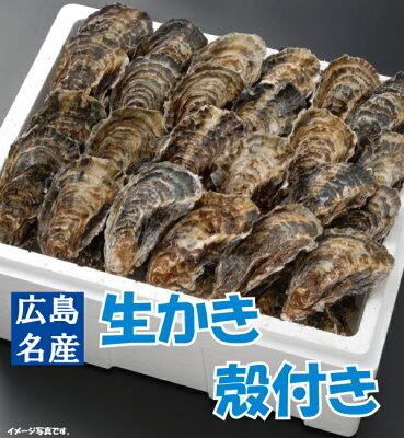 【送料無料】広島生かき殻付き牡蠣(かき)【60個入り!】【smtb-kd】【楽ギフ_のし】