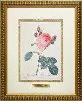 ルドゥーテ複製画シリーズ『美花選&バラ図譜』縮小版縦34.4cm(ゴールドフレーム)