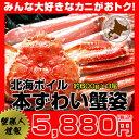 北海ボイルずわい蟹姿Mサイズ 約600g×3尾【楽ギフ_のし】
