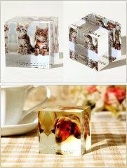 送料無料フォトアクリルキューブ(15×15×4センチ)プレゼント名入れギフト思い出子どもこども子供赤ちゃんフォトフレームフォトスタンド写真記念フォト出産祝誕生日バースデイ