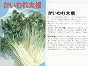 【スプラウト】かいわれ大根〔固定種〕/小袋