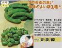 【エダマメ】豆源郷〔タキイ〕/小袋