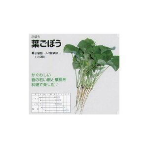 【ゴボウ】葉ゴボウ〔固定種〕/小袋