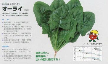 【ホウレンソウ】オーライ〔タキイ交配〕/小袋