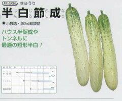 【キュウリ】半白節成(タキイ交配)/小袋