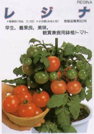 【ミニトマト】鉢物用レジナ〔サカタ〕/小袋