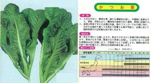 【その他の菜類】かつお菜〔固定種〕/小袋