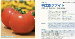 【トマト】桃太郎ファイト〔タキイ交配〕