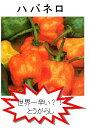 【世界の果菜】ハバネロオレンジ/小袋
