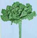 野菜のタネのお買い物 太田のタネで買える「【世界の珍しい野菜】ポルトガルケール/小袋」の画像です。価格は275円になります。