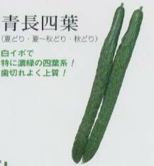 [キュウリ]青長四葉(固定種)/小袋