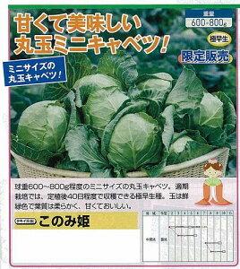 [キャベツ]このみ姫(タキイ交配)/小袋約60粒