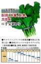 【その他の葉もの】千宝菜1号〔ダイヤ交配〕/小袋