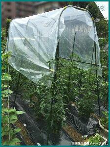 菜園用 雨よけシートセット 1m×2.1m