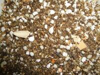 【有機質肥料】花、野菜、観葉植物等、すべての植物に使用できます。有機配合肥料アミノハーベスト10kg使用原料に魚粉・かにがらを使用し美味しい作物を簡単に作れます。