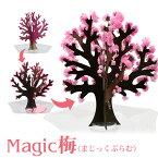 【メール便】 Magic梅 マジック梅(マジックプラム) 6時間で梅の花が満開に 新元号 令和グッズ 改名 おとぎの国